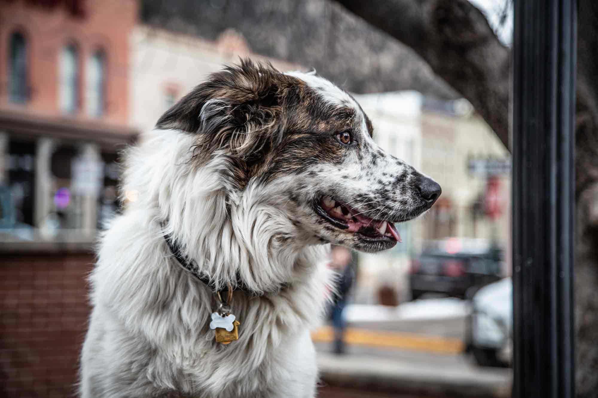 Canine on The Creek 5K Run/Walk Idaho Springs, Colorado